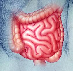 autoimmunsystem-darm